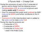 2 pyruvic acid 2 acetyl coa