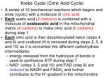 krebs cycle citric acid cycle