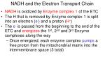 nadh and the electron transport chain