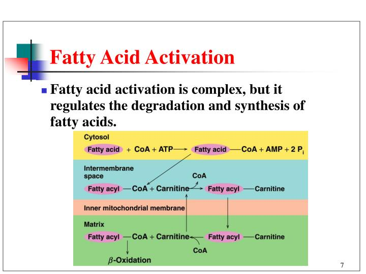lipids fatty acid and amp Background— fatty acid and glucose transporters amp -activated protein accumulation of myocardial lipids, suggesting that fatty acid uptake.