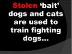 stolen bait dogs and cats are used to train fighting dogs
