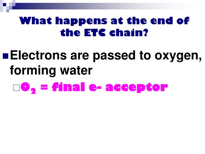 What happens at the end of the ETC chain?
