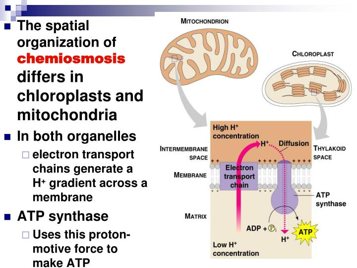 The spatial organization of