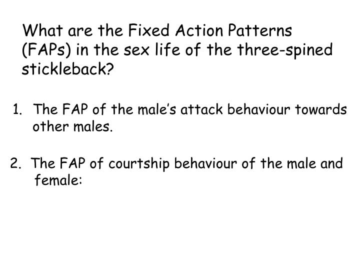 What are the Fixed Action Patterns (FAPs) in the sex life of the three-spined stickleback?