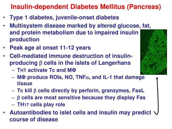 Insulin-dependent Diabetes Mellitus (Pancreas)