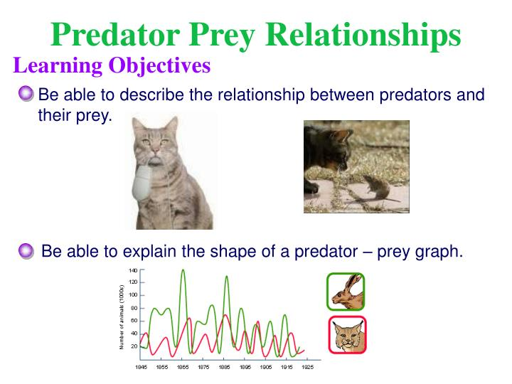 an analysis of the topic of the distance between the predator and prey The prey-predator relationship maintains the ecological balance of the earth, as if predators won't be there then the prey population would increase in earth, which would give rise to over grazing and hence this would directly affect the natural plant life circle.