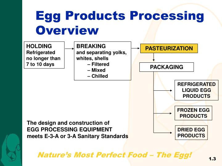 Egg Products Processing Overview