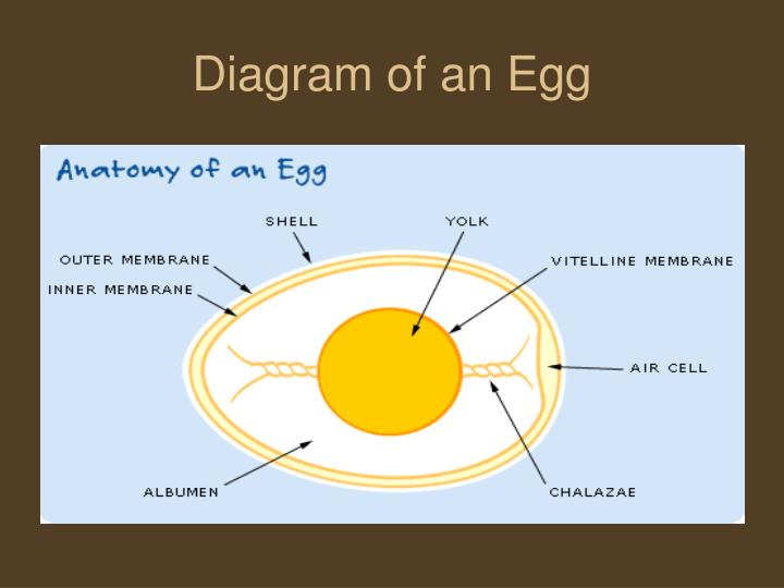 Ppt Eggs Powerpoint Presentation Id3643331
