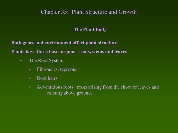 chapter 35 plant structure and growth n.