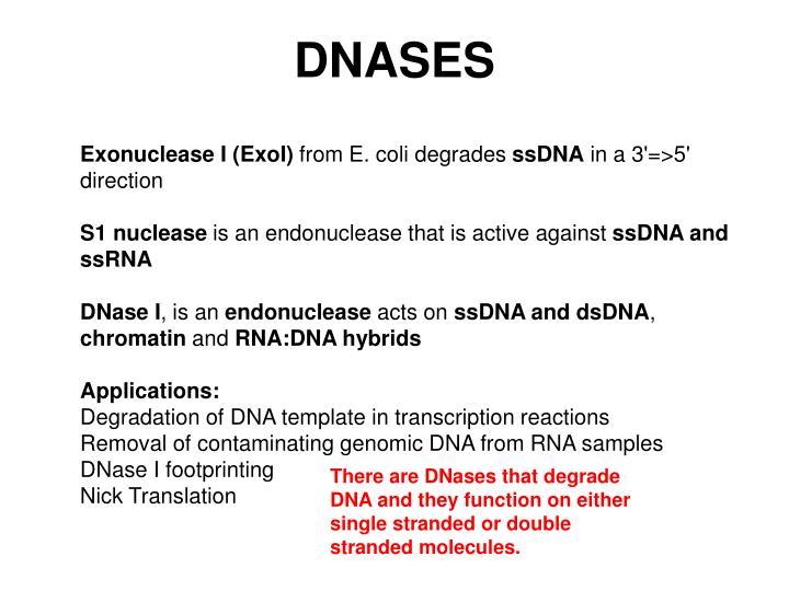DNASES