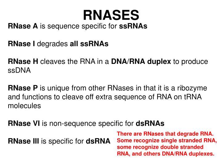 RNASES