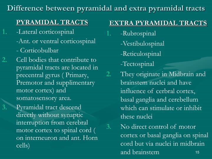 Pyramidal And Extrapyramidal Motor Pathways Impremedia Net