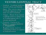 vestibulospinal tract