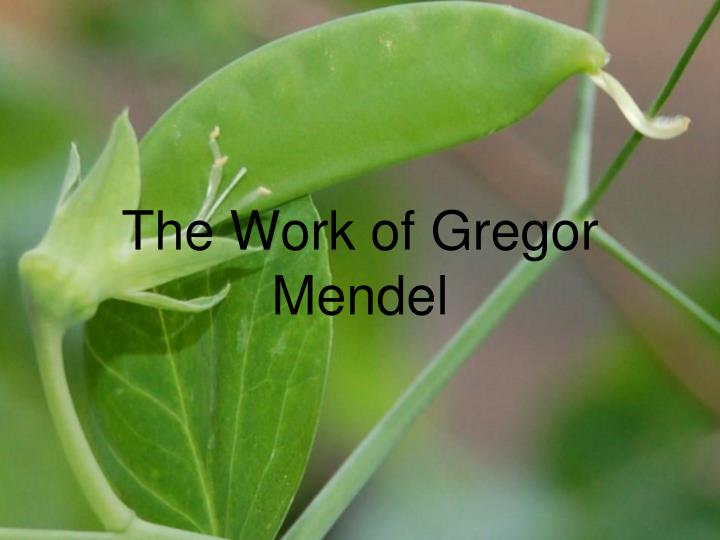 the work of gregor mendel n.