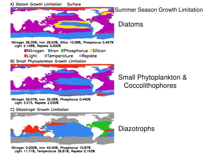 Summer Season Growth Limitation
