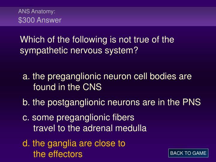 ANS Anatomy: