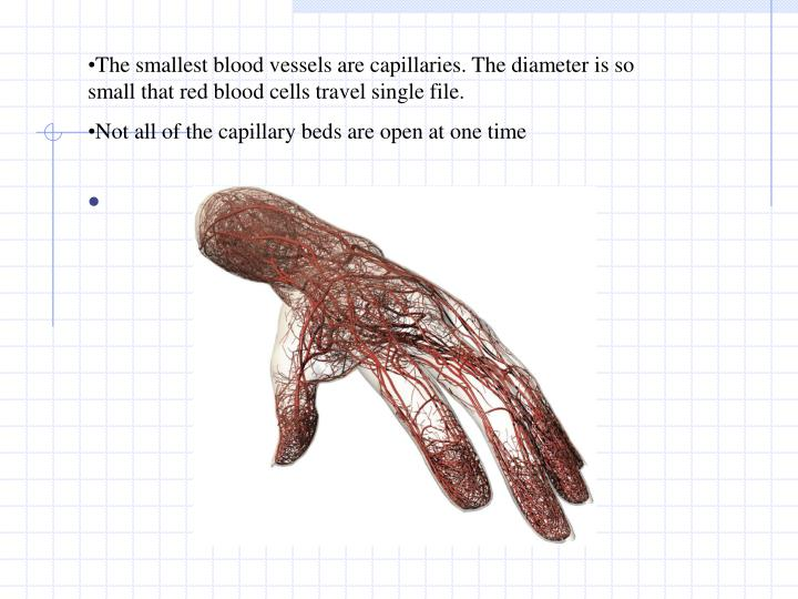 The smallest blood vessels are capillaries. The diameter is so small that red blood cells travel single file.