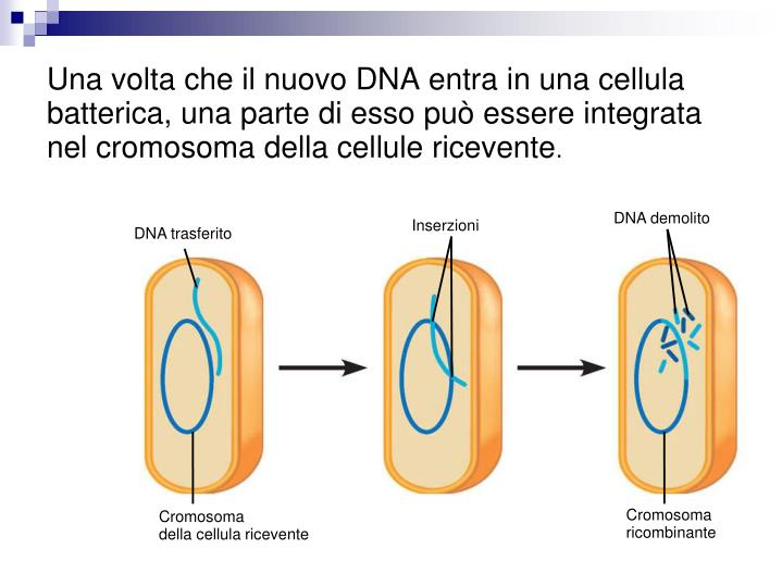 DNA demolito