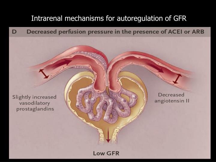 Intrarenal mechanisms for autoregulation of GFR
