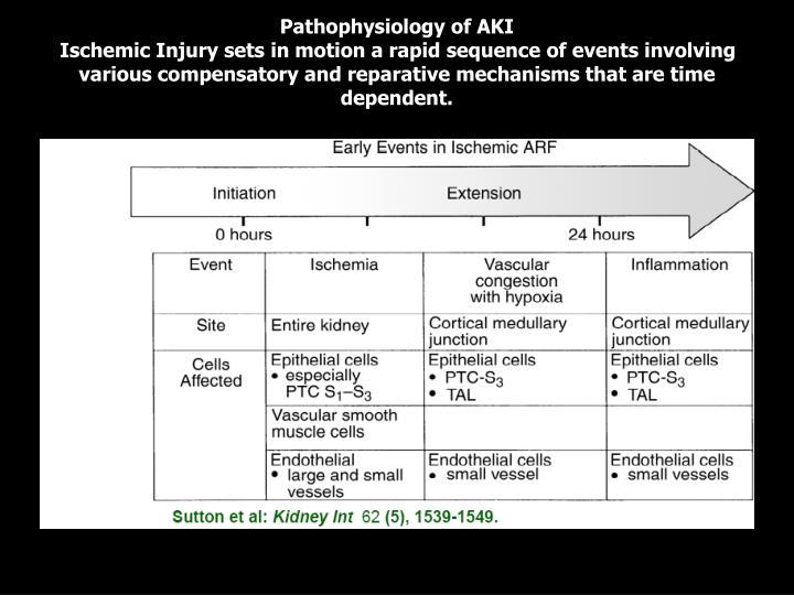Pathophysiology of AKI