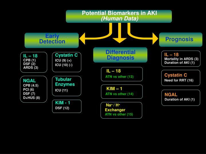 Potential Biomarkers in AKI