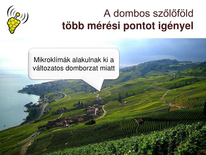 A dombos szőlőföld