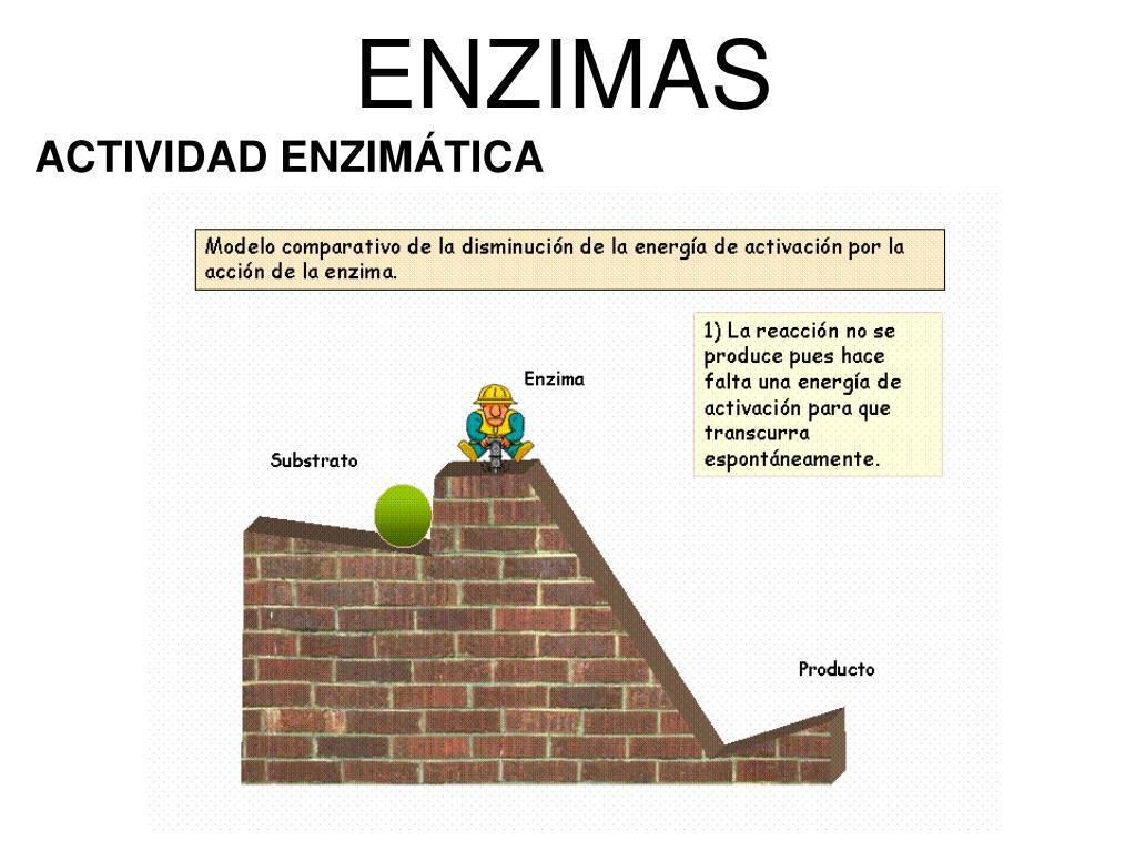 PPT - UNIDADES 16-18 METABOLISMO PowerPoint Presentation..