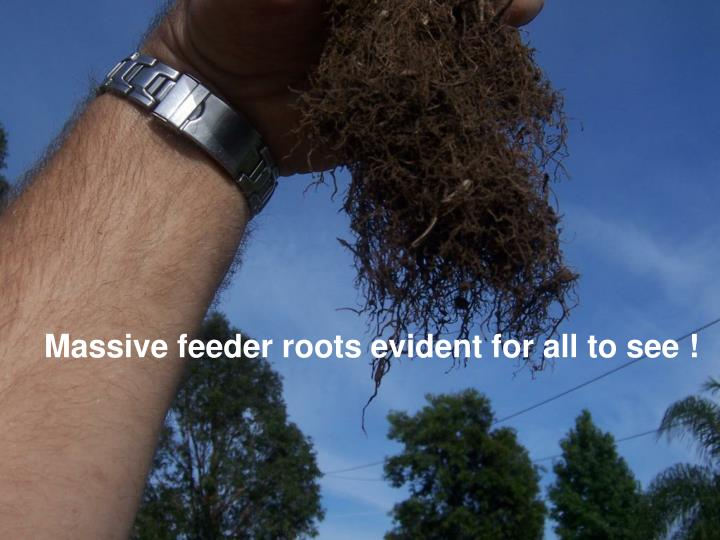 Massive feeder roots evident for all to see !