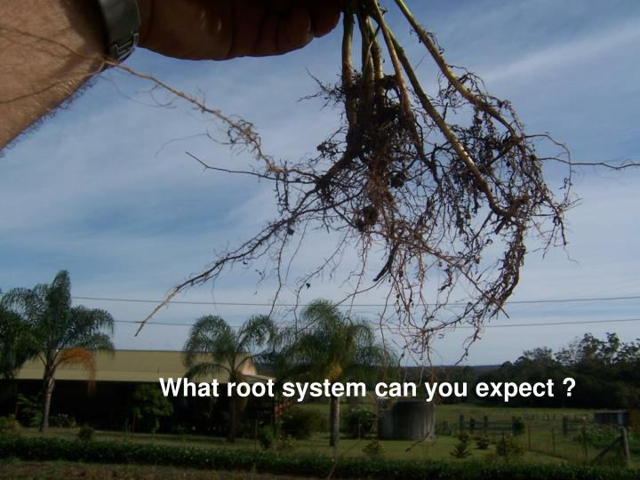 What root system can you expect ?