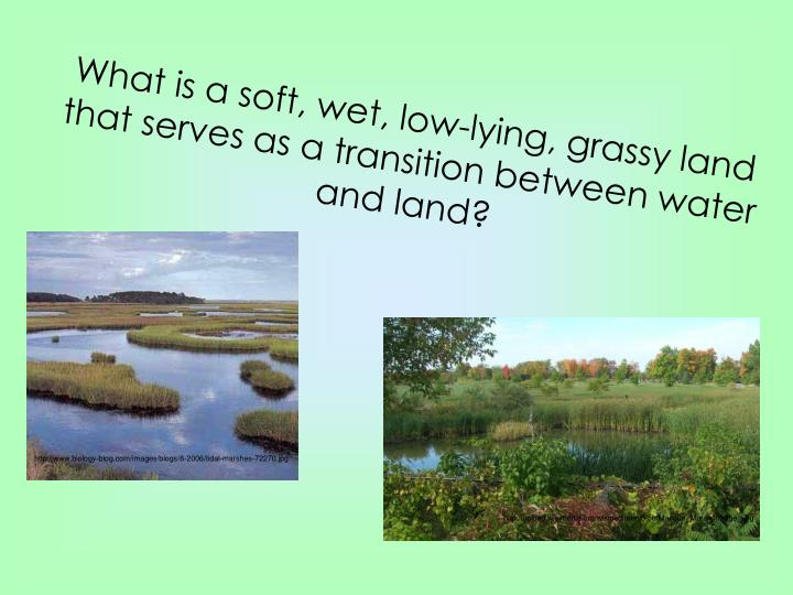 What is a soft, wet, low-lying, grassy land that serves as a transition between water and land?