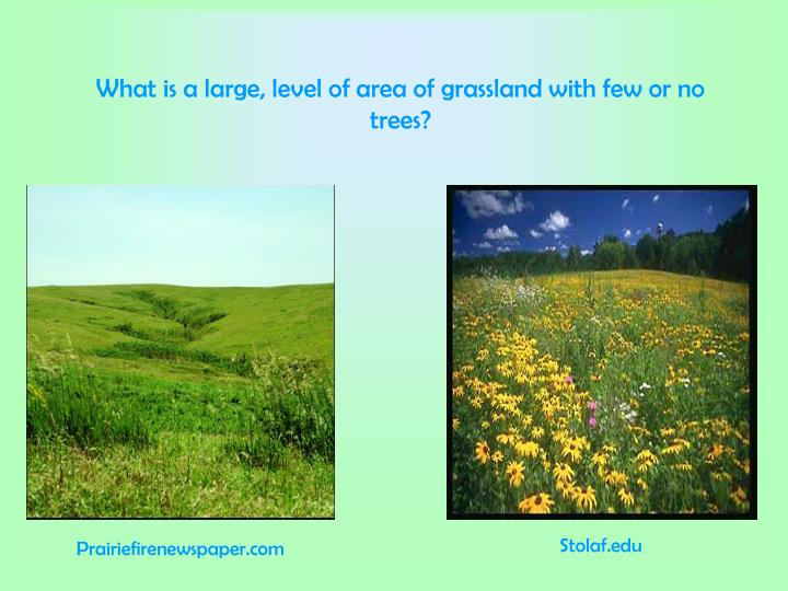 What is a large, level of area of grassland with few or no trees?
