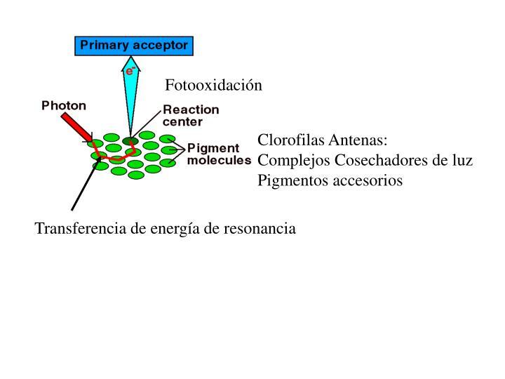 Fotooxidación