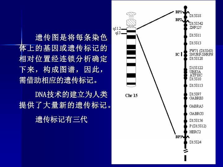遗传图是将每条染色体上的基因或遗传标记的相对位置经连锁分析确定下来,构成图谱,因此,需借助相应的遗传标记。