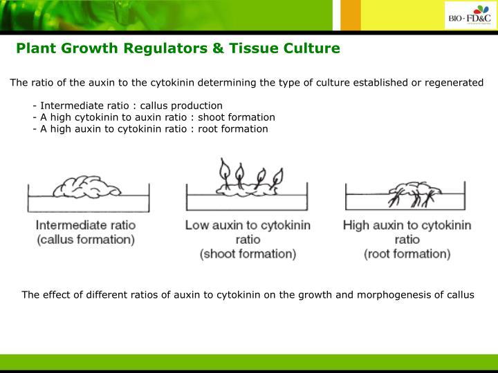 Plant Growth Regulators & Tissue Culture