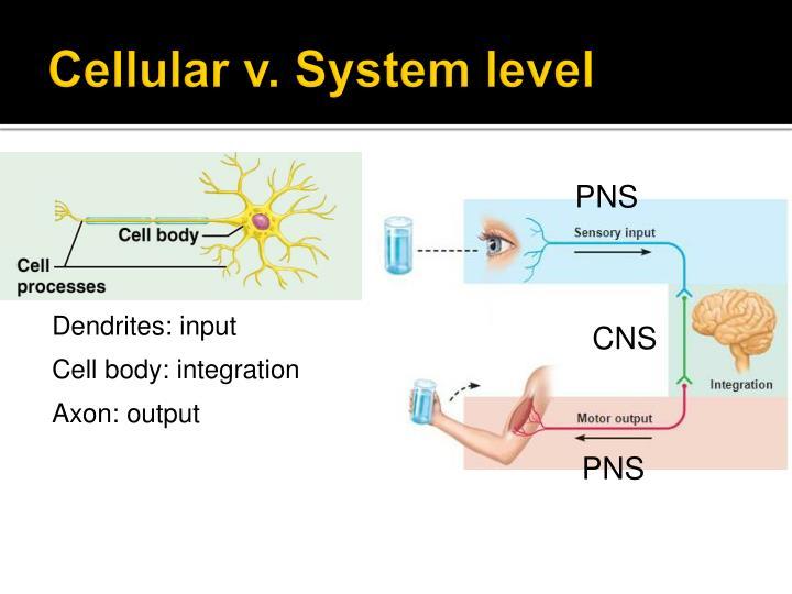 cellular level
