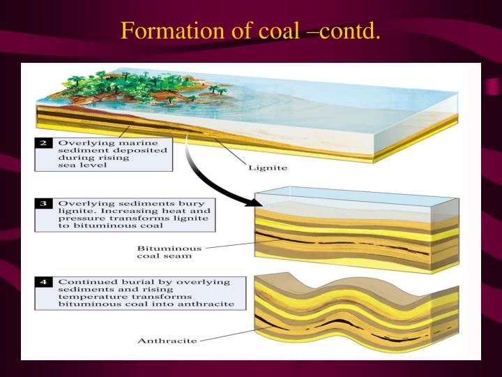 Formation of coal –contd.