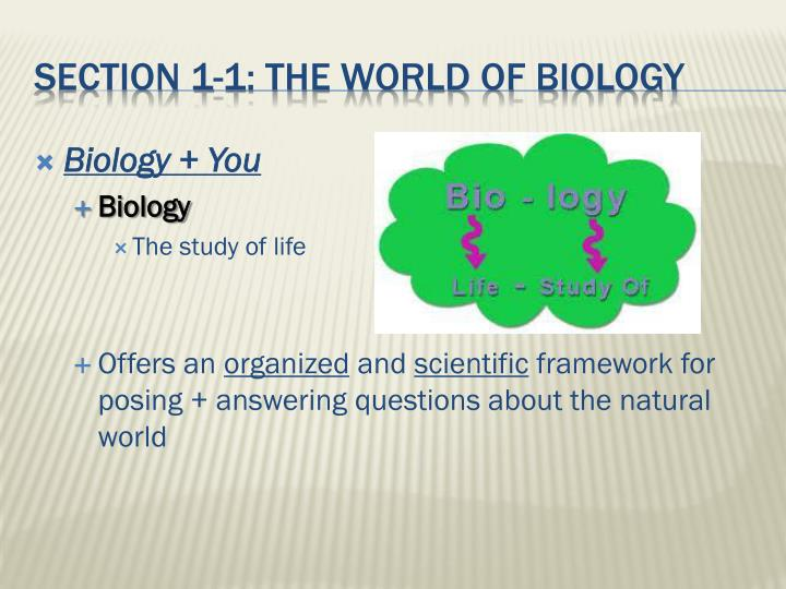 Section 1 1 the world of biology