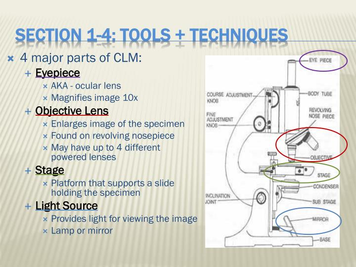 4 major parts of CLM:
