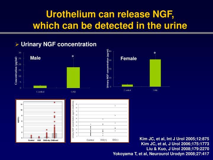 Urothelium