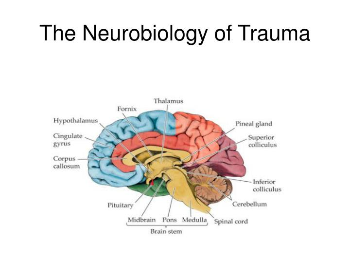 """sexual trauma intervention a case study A case study with clinical interventions will be utilized to demonstrate this concept of """"the trauma trifecta"""" and the unique challenges in treating the ptsd symptoms that can result from mst in clinical therapy."""