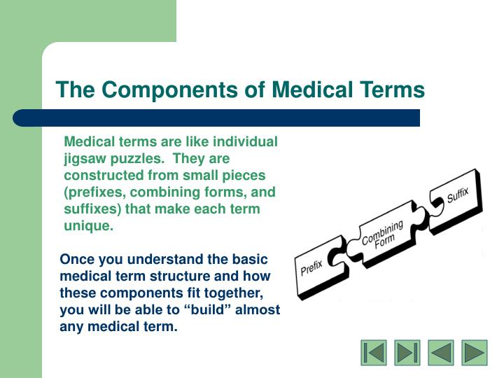Ppt Medical Terminology Basic Word Structure Powerpoint