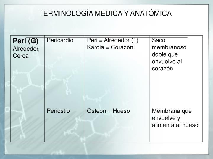 PPT - ANATOMÍA BÁSICA PowerPoint Presentation - ID:3667688