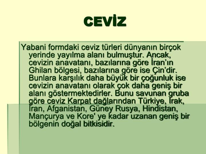 Cev z1