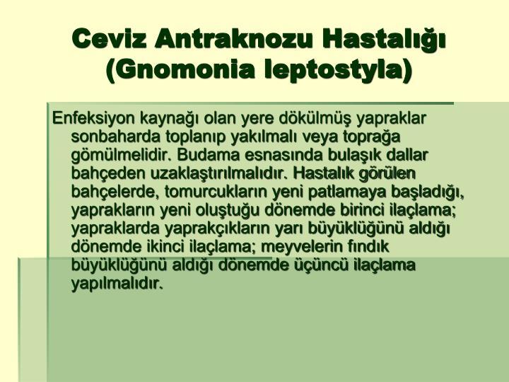 Ceviz Antraknozu Hastalığı (Gnomonia leptostyla)