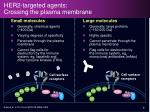 her2 targeted agents crossing the plasma membrane