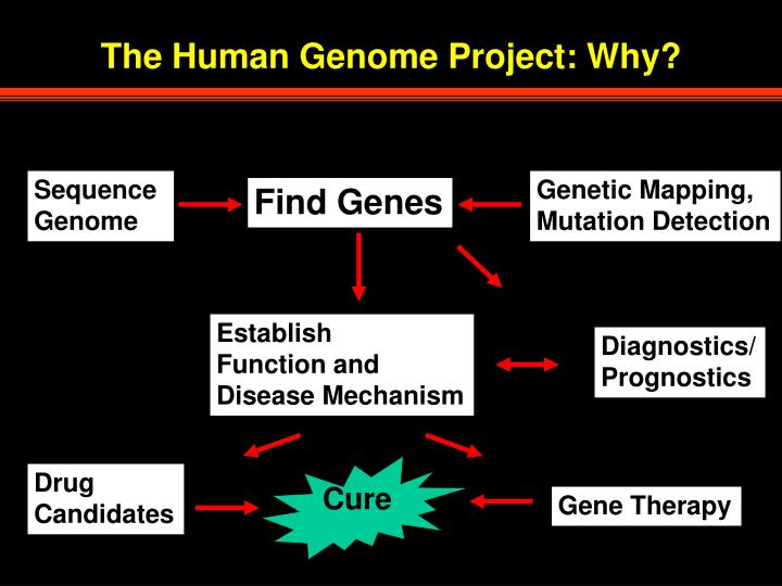 human genome project promises cures for human diseases Debate regarding the human genome project promises or statements made personalized cures for common disease if they could.
