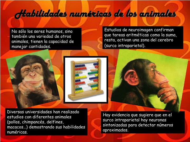 Habilidades numéricas de los animales