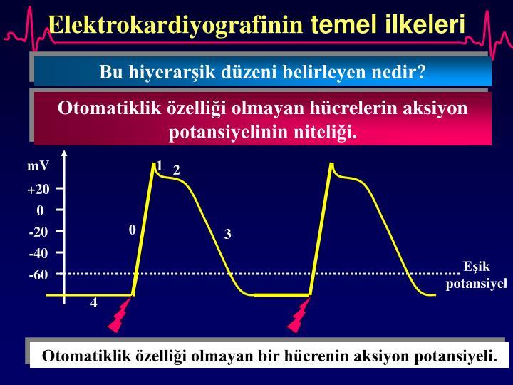 Elektrokardiyografinin