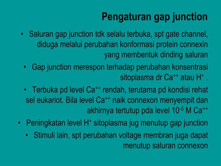 Pengaturan gap junction