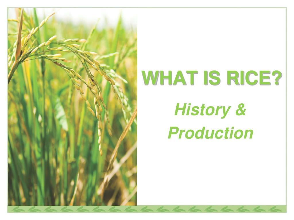 Ppt What Is Rice Powerpoint Presentation Free Download Id 3677870
